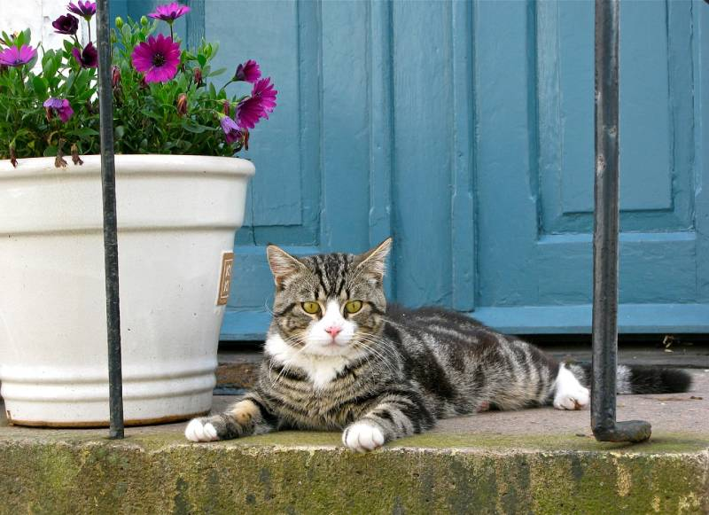le compost avec de la litière de chat pour nourrir les plantes du jardin
