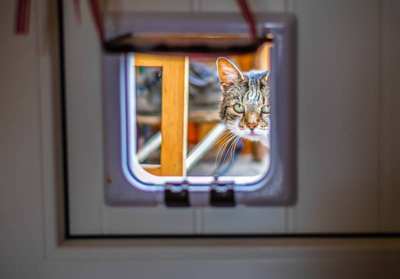 chatière pour accéder au balcon