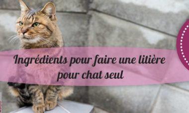 fabrication litiere chat : simple et pas cher