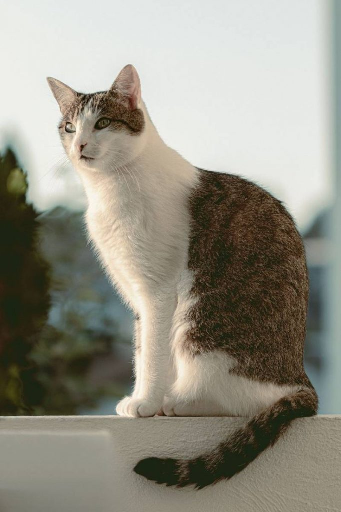 chat balcon appartement