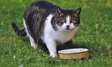 appétit chat